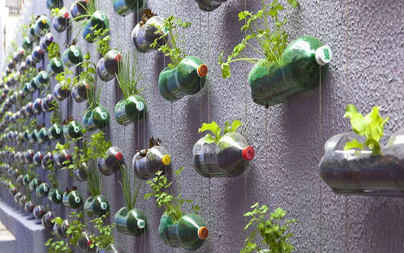 top vertical garden
