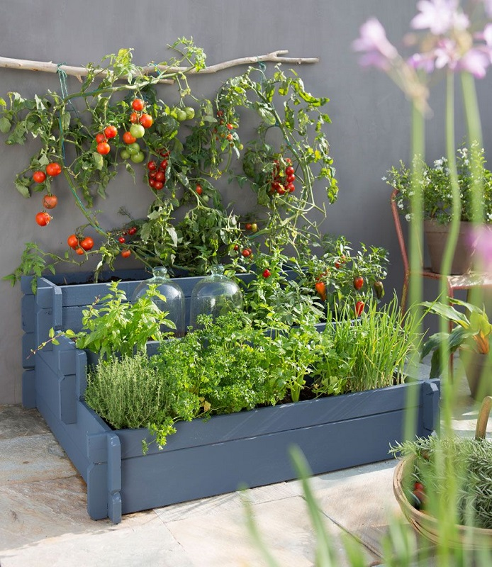 Urban Gardening Ideas On Your Terrace Or Balcony