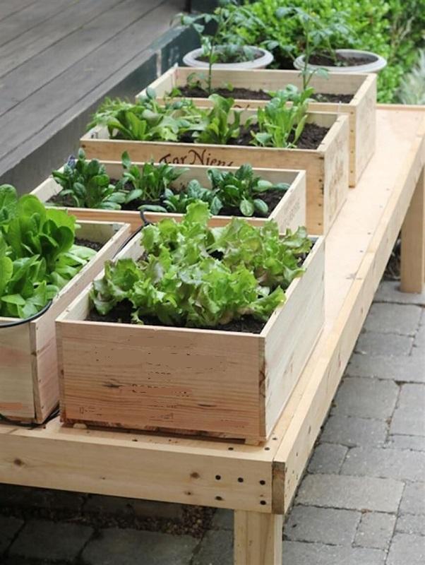 Urban gardening ideas