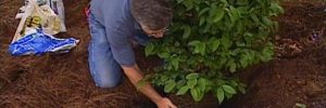 7 Easy tricks to plant trees and shrubs