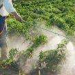 spray pesticides safely